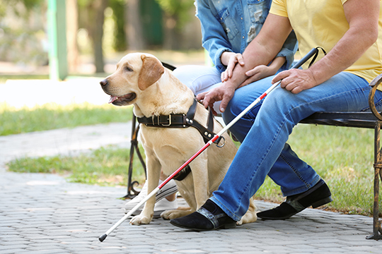 A woman and man with guide dog sitting on bench in park.