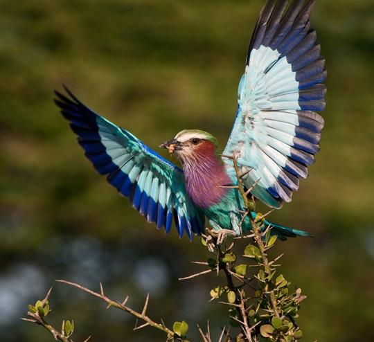 Une Oiseau